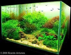 Depth aquascaping