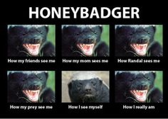 The Crazy Nastyass Honey Badger (look it up on youtube...so funny!  Then you'll know who Randal is if you don't already)