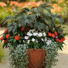Container Gardening Ideas Red and white plants for shade - National Garden Bureau - Diy Garden, Shade Garden, Dream Garden, Lawn And Garden, Garden Plants, Garden Landscaping, Garden Ideas, Potted Plants, Container Plants