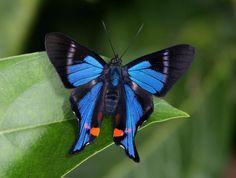 Butterflies of the Rainforest