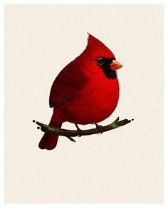 Mike Mitchell - Cardinal   http://www.sirmitchell.com/