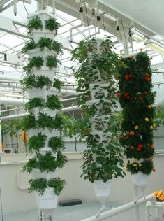 Vertical Hydroponics Gardens ..This will definitely keep gophers away!