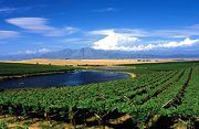 Tourism for Riebeek Valley South African Wine, Africa Travel, Garden Inspiration, Vineyard, Golf Courses, Tourism, Places, Rebel, Outdoor