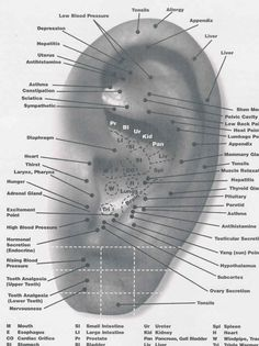 Ear Reflexology points for the Body that you can use Essential Oils on in addition to one's feet. Ear Reflexology, Acupressure Massage, Reflexology Points, Acupuncture Points, Acupressure Points, Alternative Health, Alternative Medicine, Interstitial Cystitis, Health Heal