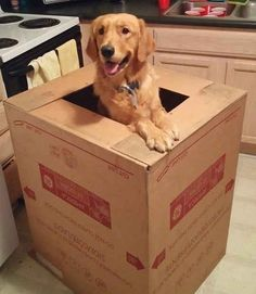 When this dude planned a special delivery just to surprise you.