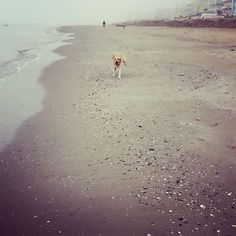 #tobi ##haveingfun #dogsofinstaworld #sunday #atthebeach http://blog.fmcarsrl.com/wp-content/uploads/2016/11/14574082_175993979529996_4878841982195073024_n.jpg http://blog.fmcarsrl.com/index.php/2016/11/20/tobi-haveingfun-dogsofinstaworld-sunday-atthebeach/