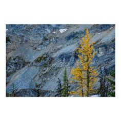 Fall Foliage - Maple Pass Loop 2 Print