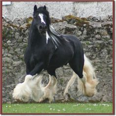 Gypsey horse - Click image to find more Animals Pinterest pins