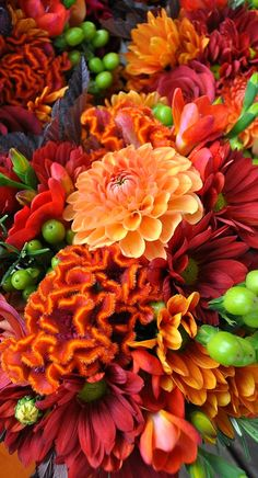 Gardening Autumn - Autumn blooms - With the arrival of rains and falling temperatures autumn is a perfect opportunity to make new plantations Fall Wedding Flowers, Fall Flowers, Fresh Flowers, Beautiful Flowers, Seasonal Flowers, Beautiful Gorgeous, Orange Flowers, Purple Wedding, Boho Wedding