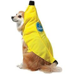 @Alissa Burgess this dog looks psychotic...