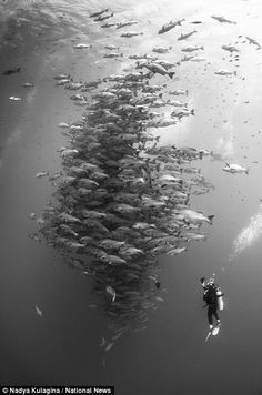A diver inspects a school of fish in this photo, which won Nadya Kulgina first place in the Wide Angle Divers category