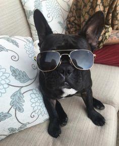 Miss Asia Kinney Mans Best Friend, Best Friends, Lady Gaga, Talk To Me, Asia, Lol, Pets, Instagram Posts, Sweet Hearts