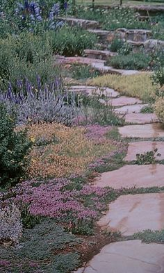 Ground cover for around rocks by driveway