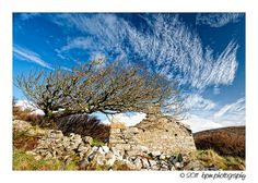 Old cottage ruin with windswept tree in Donegal Ireland