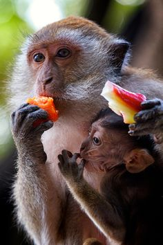 Crab Eating Macaque by Mike Thomas, via 500px