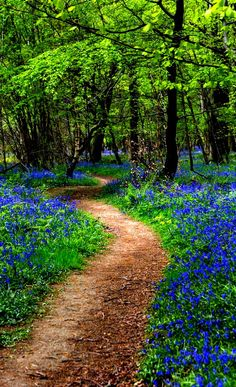 through the bluebell woods Kings Wood Kent UKPath through the bluebell woods Kings Wood Kent UK Beautiful World, Beautiful Places, Magic Places, Forest Path, Walk In The Woods, Nature Pictures, Pathways, Beautiful Landscapes, The Great Outdoors