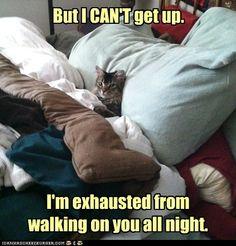 So true! #cat #humor