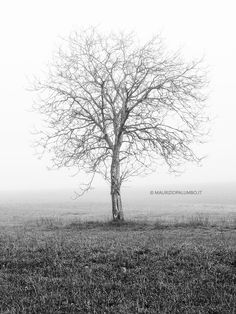 A lone tree in the misty Tuscan countyside
