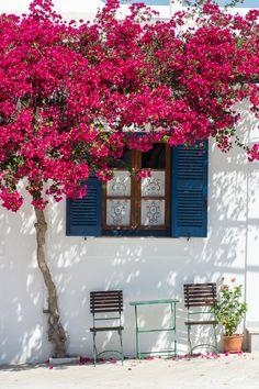 Bougainville - Paros, Greece