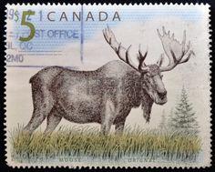 CANADA - CIRCA 1997: Un sello impreso en Canadá muestra un orignal Moose, alrededor del año 1997