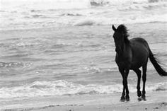 """Reminds me of my favorite book of all time """"The Black Stallion."""" Any of you other horse lovers out there still have that one on your shelf? All The Pretty Horses, Beautiful Horses, Animals Beautiful, Cute Animals, Simply Beautiful, Black Horses, Wild Horses, Black Stallion, All About Horses"""