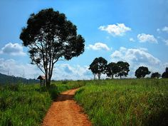 Path at Khao Yai National Park, Thailand