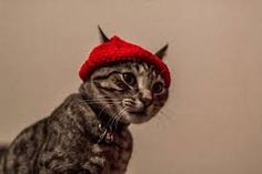 cat wearing beanie - Google Search