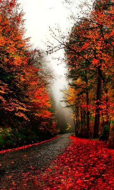 Hauntingly Beautiful Autumn day