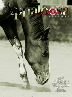 An Appaloosa yearling at play adorned the cover of the July 2013 Appaloosa Journal. Photo by Brooke Flagtwet.