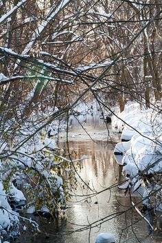 Walking in a Winter Wonderland! I Love Winter, Winter Snow, Winter Christmas, Winter White, Winter Pictures, Cool Pictures, Cool Photos, Scenery Pictures, Winter Scenery