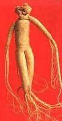 Ginseng root looks like a human body, and it is a holistic cure for nearly all ailments