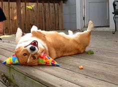 """12)-12 Dogs Who Can't Handle Birthdays   12   - Three Million Dogs. """"I think I've had too much punch again..."""""""