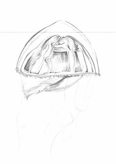 Sketch_Jellyfish_28