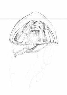 Sketch_Jellyfish_28
