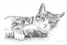 Tabby Cat, Cat Art Print, Pencil Drawing of a Cat. Gift for Cat Lover. - - Tabby Cat, Cat Art Print, Pencil Drawing of a Cat. Gift for Cat Lover. Cat Lover Gifts, Cat Gifts, Cat Lovers, F2 Savannah Cat, Cat Sketch, Cat Art Print, Cat Names, Pencil Drawings, Art Drawings