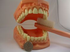 My mom gave one of these giant plastic denture models and toothbrushes to Chris and I last Christmas. Love it!