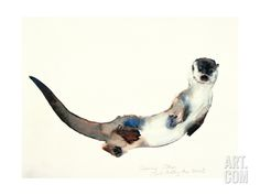 Curious Otter, 2003 Giclee Print by Mark Adlington at Art.com