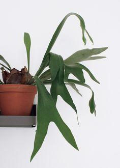 plant green shelf no pot minimal gardener