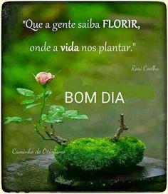 Que a gente saiba florir...  Bom dia!