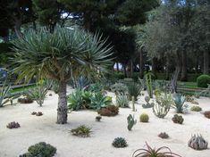 Unusual Cactus to Grow Ideas For Your Garden