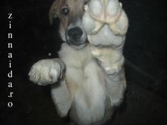 vremea-kory-bella-9-4 Beast, Friends, Dogs, Animals, Amigos, Animales, Animaux, Pet Dogs, Doggies