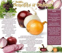 Recipe for Onion Cough & Cold Syrup / Natural Remedies / Health Benefits of Onions Health And Nutrition, Health And Wellness, Nutrition Tips, Onion Benefits Health, Benefits Of Red Onion, Food Facts, Herbalife, Natural Healing, Raw Food Recipes