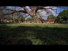 Planning to visit La Union soon? We've got a list of the best La Union tourist spot and what to do in La Union to help you plan your trip. La Union Philippines, Tourist Spots, Plan Your Trip, How To Plan, Plants, Plant, Planets