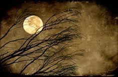 Halloween Moon - 5x7 Fine Art print - full moon, moonrise, spooky, trees, branches,full moon, raven, home decor