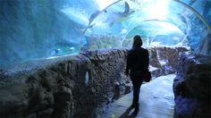 Aquarium Sea Life de Benalmadena - Costa del Sol (Espagne)