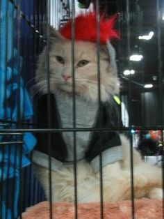 Cats available for adoption showcased at the Super Pet Expo