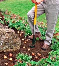 Gardening Tips 15 Tips for Planting Your Favorite Bulbs Fill your garden with beautiful bulbs that bloom in spring, summer, and fall. Use these tips to ensure Tips for Planting Your Favorite Bulbs Fill your garden with beautiful bulbs that bloom Garden Yard Ideas, Lawn And Garden, Garden Projects, Garden Landscaping, Planting Tulips, Fall Planting, Planting Bulbs In Spring, Tulips Garden, Fruit Garden