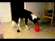 Best Dog Toys to Entertain a Large Breed Dog