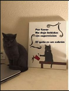 cuidado con el  gato....