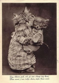 lovely vintage cat picture!